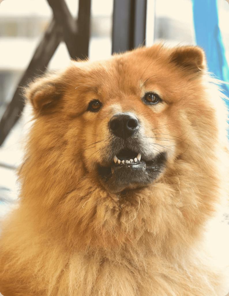 Bears - Foko Retail's Security Dog